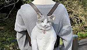 Katze auf den Rücken geschnallt