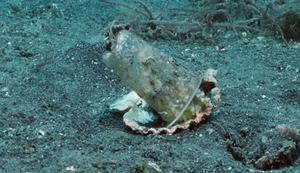 Ein Tintenfisch zieht um