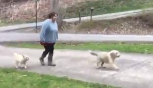 Hunde verladen