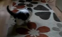 Katze vs Teppich