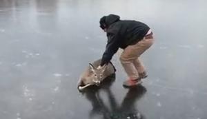Reh vom Eis holen