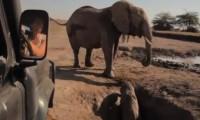 Elefantenbaby im Erdloch