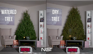 Den Weihnachtsbaum immer bewässern