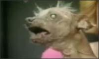 ugly dog - video