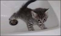 cats in sinks