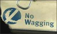 no wagging