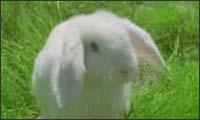 wendys - bunny