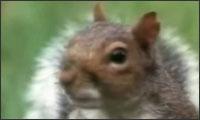 talentiertes eichhörnchen