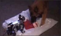 hund gegen roboter