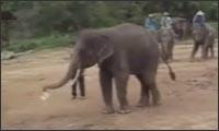 elefanten fussball