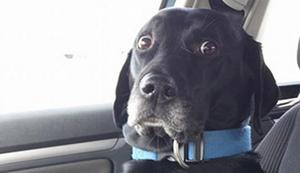 Auf dem Weg zum Tierarzt