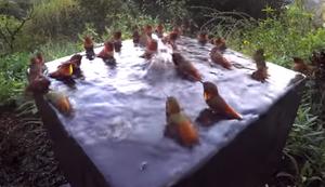 Kolibri Poolparty