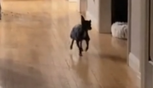 Gute Laune Hund