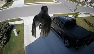 Schwebender Vogel