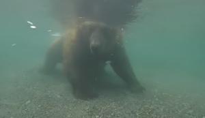 Ein Bär beim Fischen
