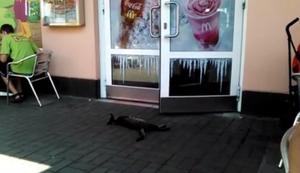 Katze im Ruhemodus