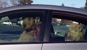 Zwei Hunde warten auf Herrchen