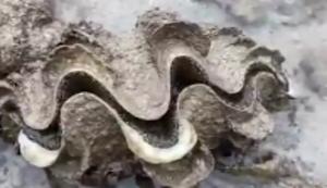 Muschel untersuchen
