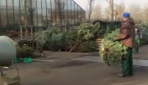 Weihnachtsbaum einpacken