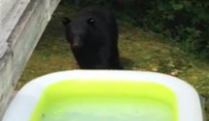 Bär nimmt ein Bad