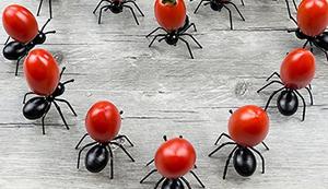 Hungrige Ameisen