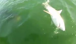 Kleiner Hai-Happen