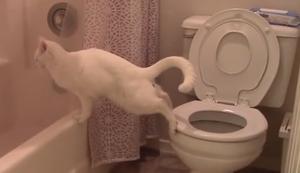 Katze macht ins Klo
