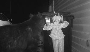 Der Bärenschreck