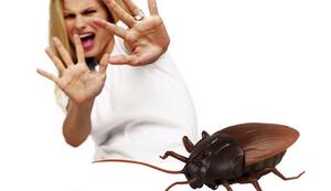 Ferngesteuerte Kakerlake