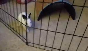 Falscher K�fig f�r das Kaninchen