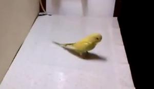 Cleverer kleiner Vogel