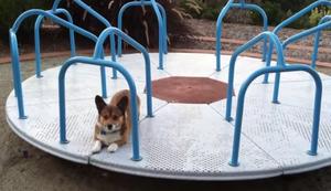Mit dem Hund auf den Spielplatz
