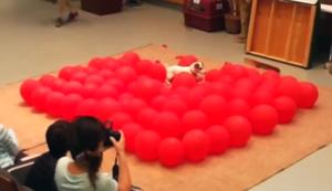 Weltrekord im Ballons platzen lassen