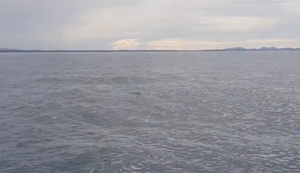 Neulich beim Whale Watching