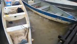 Fluss voller Piranhas