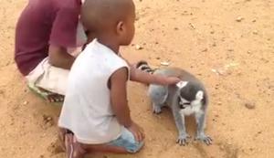 Lemur will gekrault werden