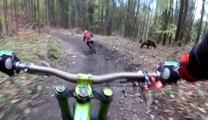 Bärenstarke Begegnung beim Downhill