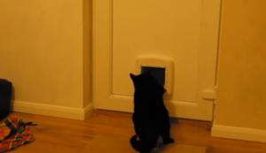 Mit Gewalt durch die Katzenklappe