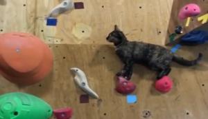 Katze an der Kletterwand