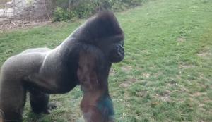 Sicherheitsglas im Zoo