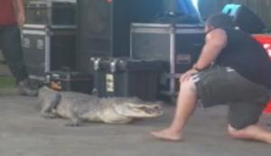 Ein Krokodil sollte man niemals untersch�tzen