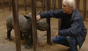 Baby Nashorn auf der Flucht