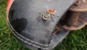 Spinne im Angriffsmodus
