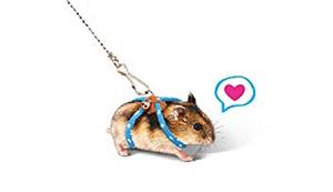 Hamster-Leine