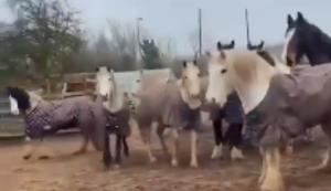 Unter Pferden
