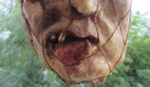 Kopf im Netz für Horrorfilm