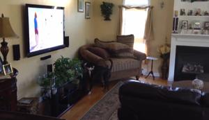 Hund guckt Fernsehen