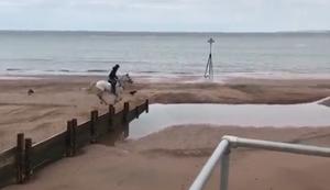Mit dem Pferd am Strand reiten