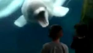 Beluga-Wal spielt mit Kindern