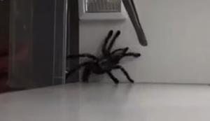 Spinne einfangen